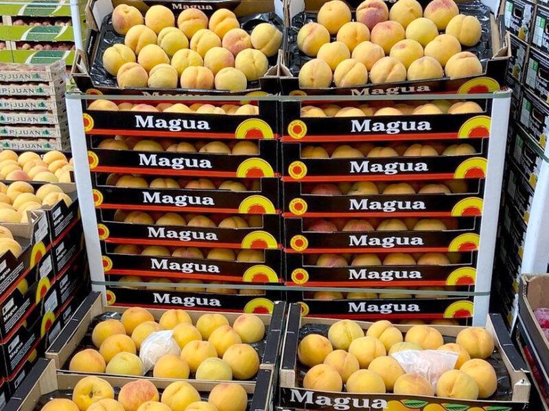 frutas julio_albaricoque